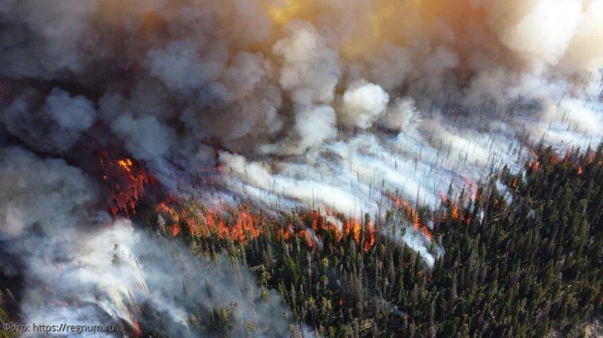 Профессор РАН Сергей Барталев: Лесной кодекс РФ требует срочного изменения