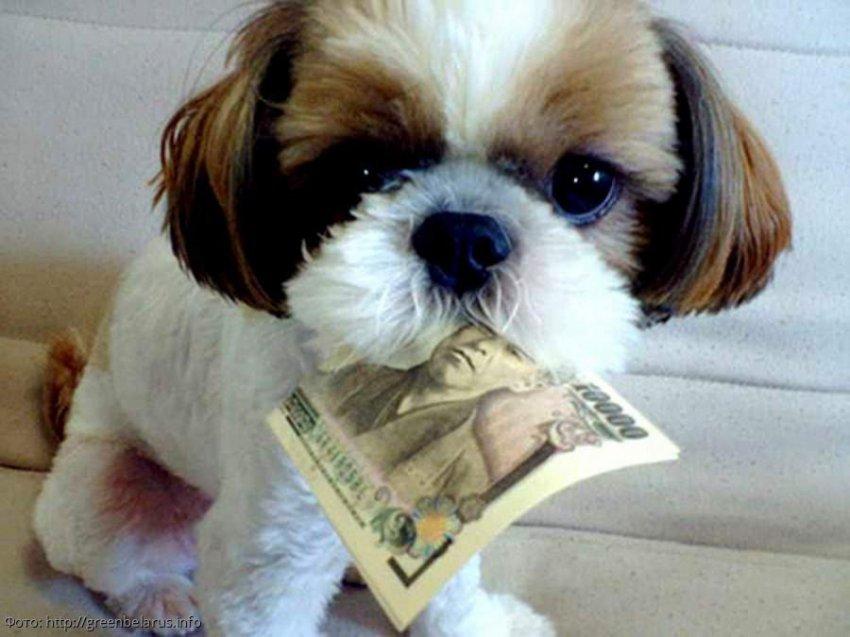 Предполагается введение налога на содержание домашних животных