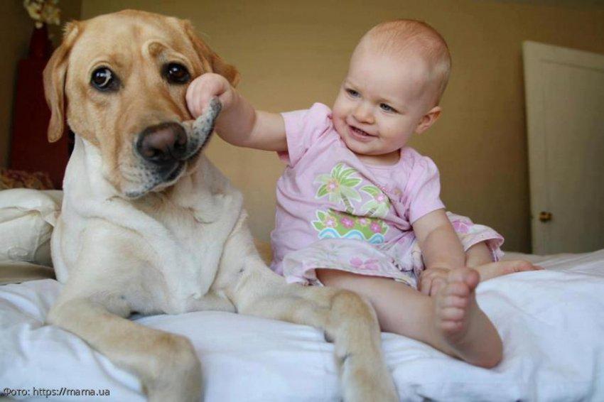 6 фотографий, которые могут нести опасность для ваших домашних животных