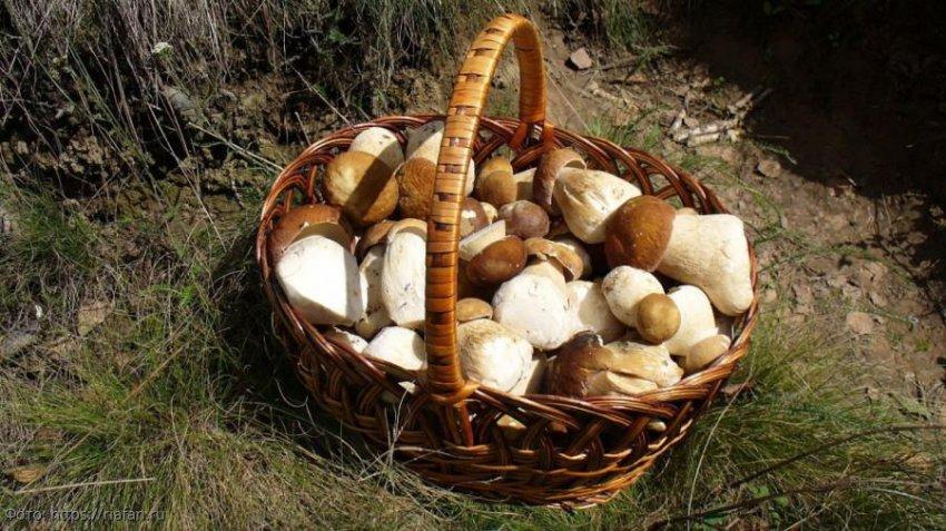Правила сбора грибов, знание которых убережет от неприятных последствий
