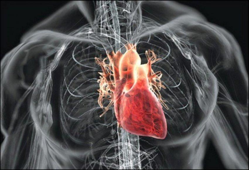 Мозг в сердце - важное оружие против стресса