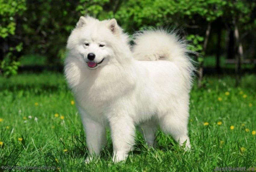 ТОП-7 самых дорогих пород собак в мире