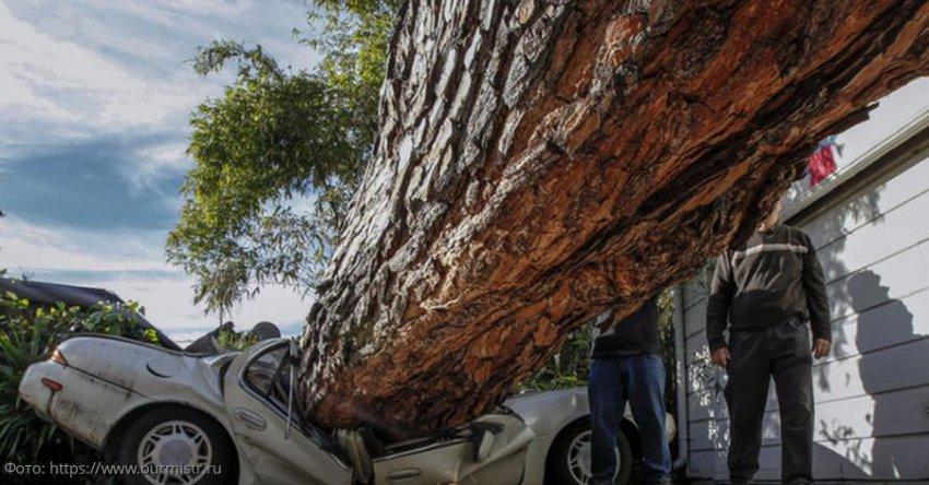 Действия автолюбителя, если на автомобиль упало дерево