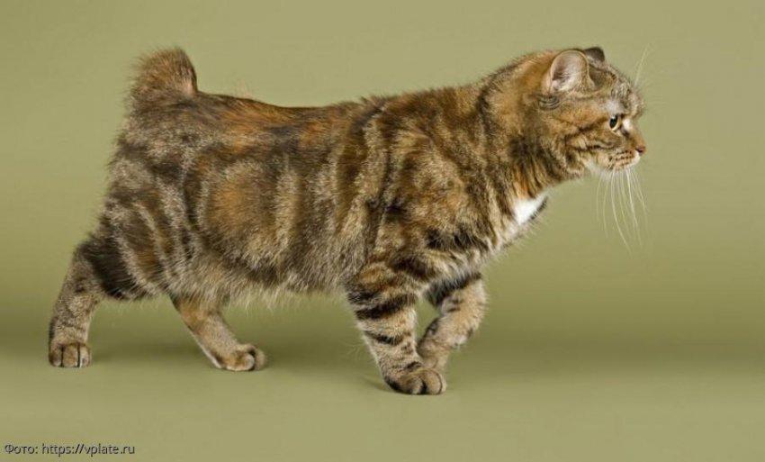7 самых активных пород кошек