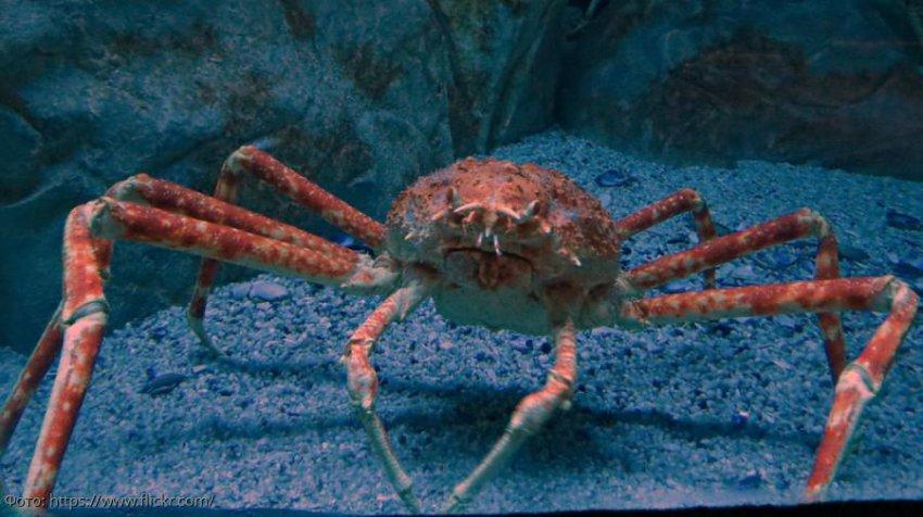 Странные обитатели морских глубин