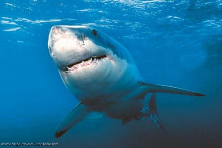 Важность акул для общего биоразнообразия и здоровья экосистем мирового океана