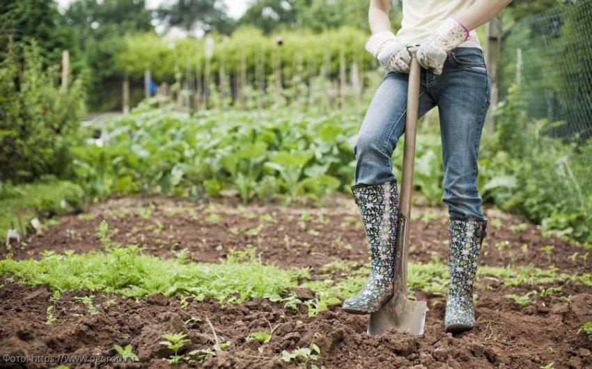 Лунный календарь садовода-огородника с 9 по 15 сентября