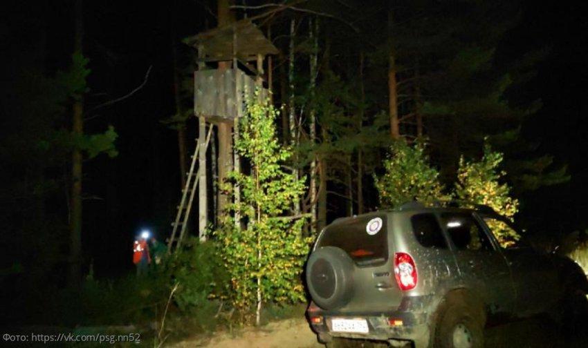 В Нижегородской области медведи заставили пенсионерок забраться в дом на дереве