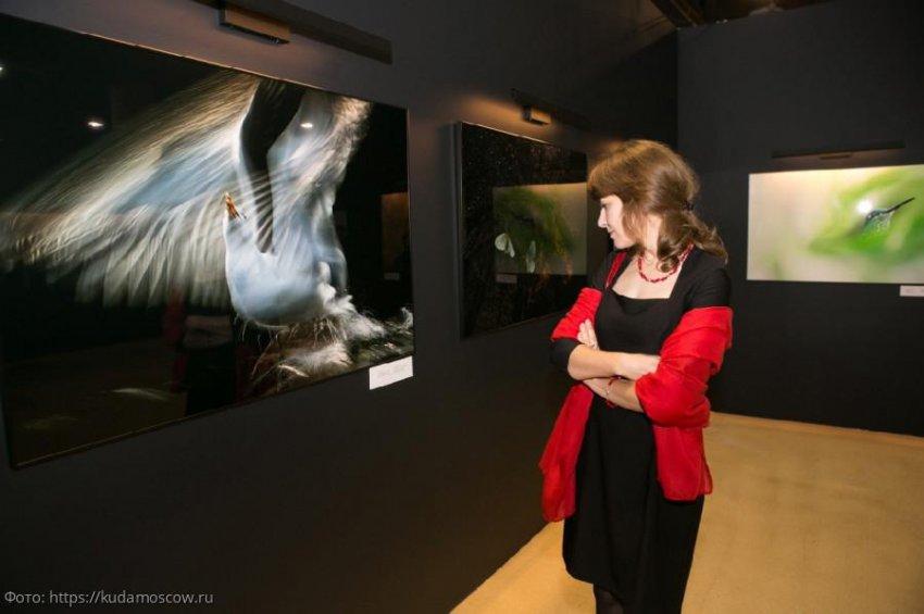 На фестивале дикой природы «Золотая черепаха» презентуют инклюзивный проект