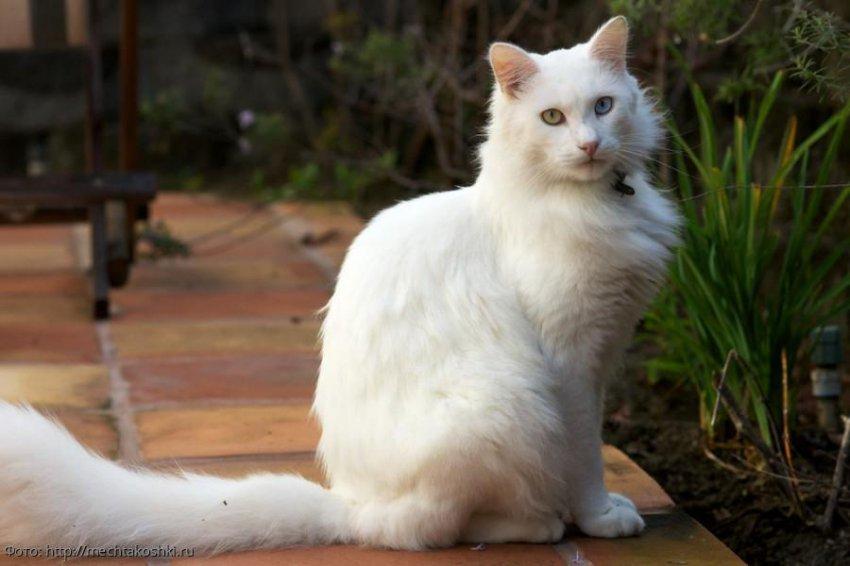5 самых шумных пород кошек