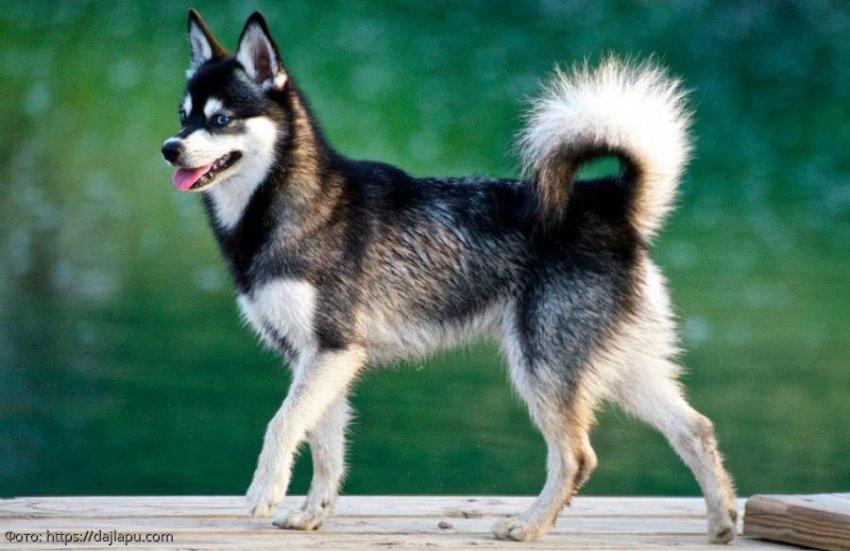 Три породы собак, о существовании которых вы можете не знать