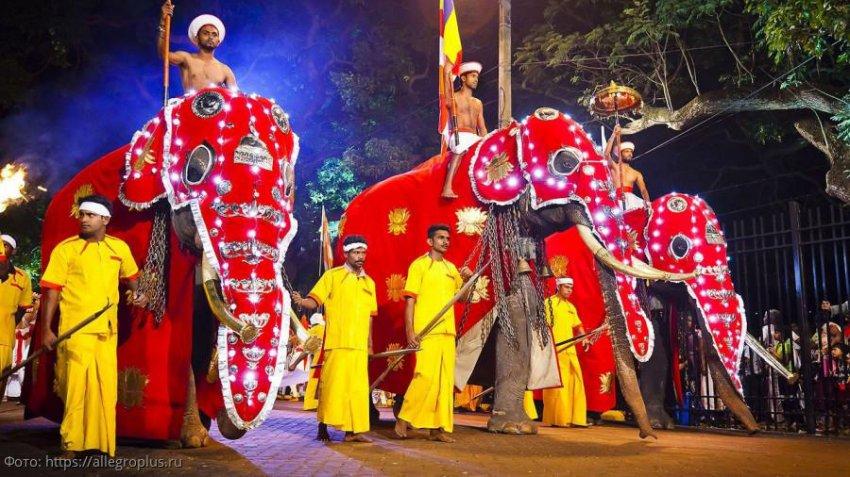 Бешеные слоны покалечили людей на Шри-Ланке