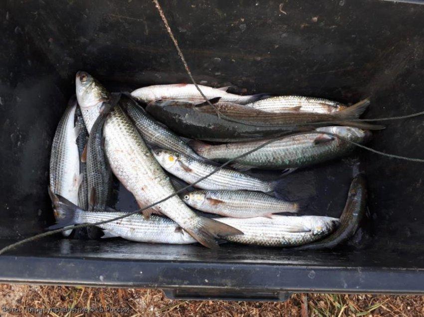 Сотрудники погрануправления по Краснодарскому краю задержали бригадира рыбопромысловой бригады за незаконную добычу кефали