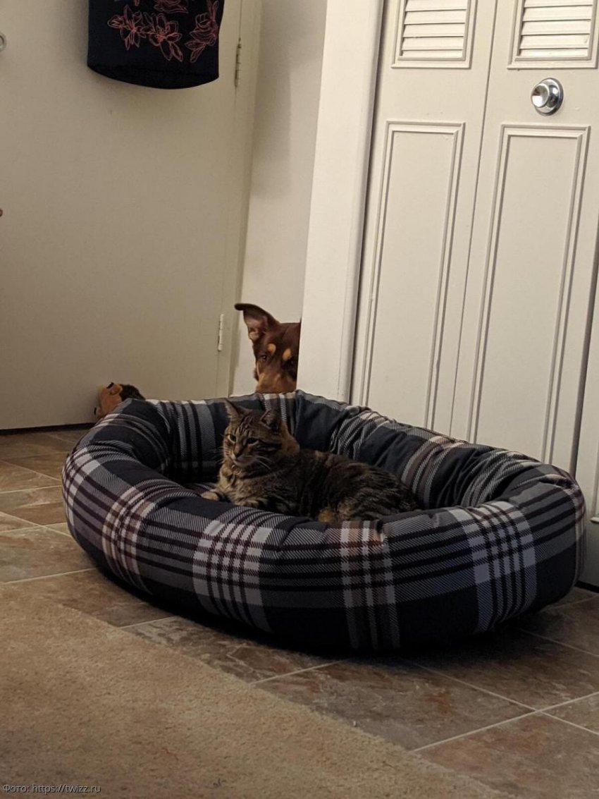 10 котов, которые отжали собачьи лежанки и им нестыдно