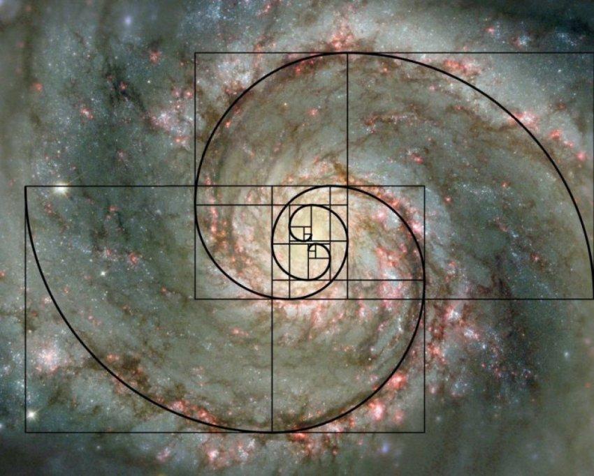 Природа и космос пронизаны числом Фибоначчи