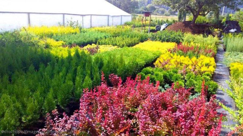 Лунный календарь садовода-огородника с 16 по 22 сентября