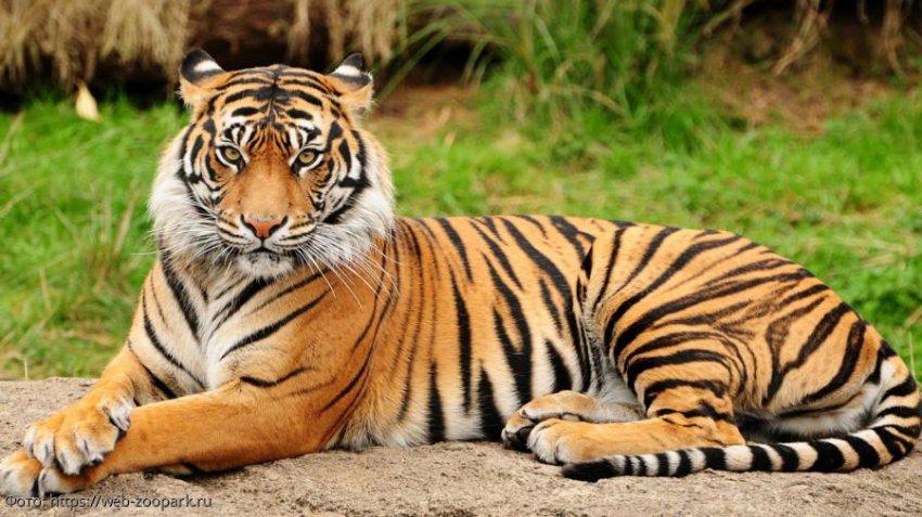 Животные, которыми могли быть знаки зодиака в прошлой жизни