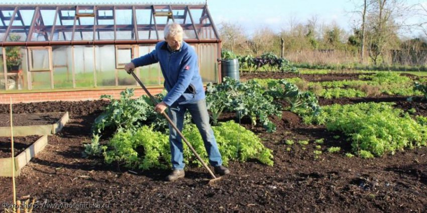 Ошибки огородников, которые совершаются в осенний период