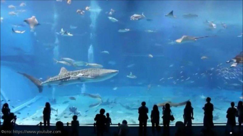 Большая белая: интересные факты из жизни морских хищников