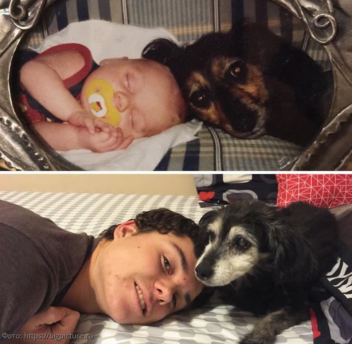 10 трогательных фотографий собак и их хозяев в начале дружбы и через много лет