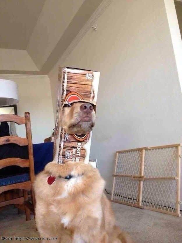 Фото собак, которые непонятным образом попали в нелепые ситуации
