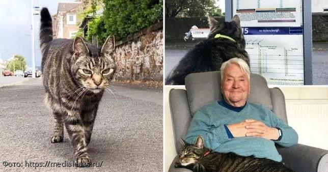 Каждый день блудный кот отправляется в разъезды, а верный хозяин его ждет