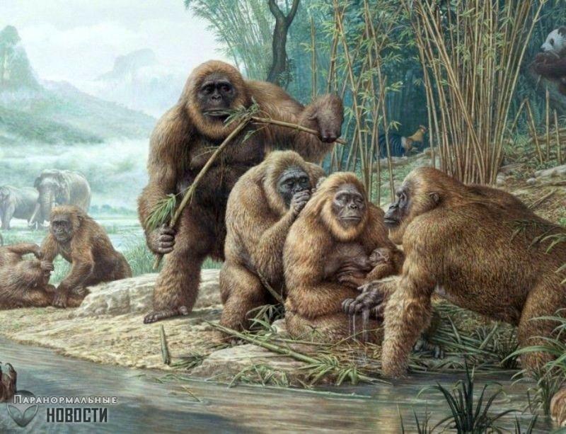 Гигантопитеки - тайны самых больших обезьян в истории