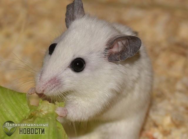 Ученые извлекли мозг мыши из черепа и почти месяц поддерживали в нем жизнь
