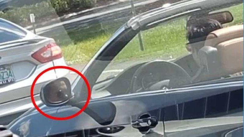 Пользователи интернета в замешательстве: появилось видео с «глюком» в зеркале авто