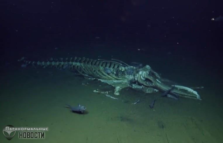 «Похоже на кадры из фантастического фильма»: На видео сняли как десятки угрей и осьминогов пожирали кита
