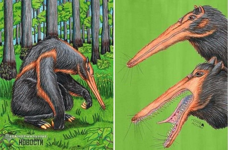 Монстр из Таттл Боттомс: Наблюдение огромного муравьеда в лесах штата Иллинойс