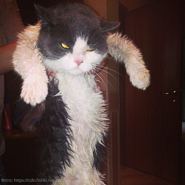 10 фотографий котов, которые готовы отомстить за то, что их помыли