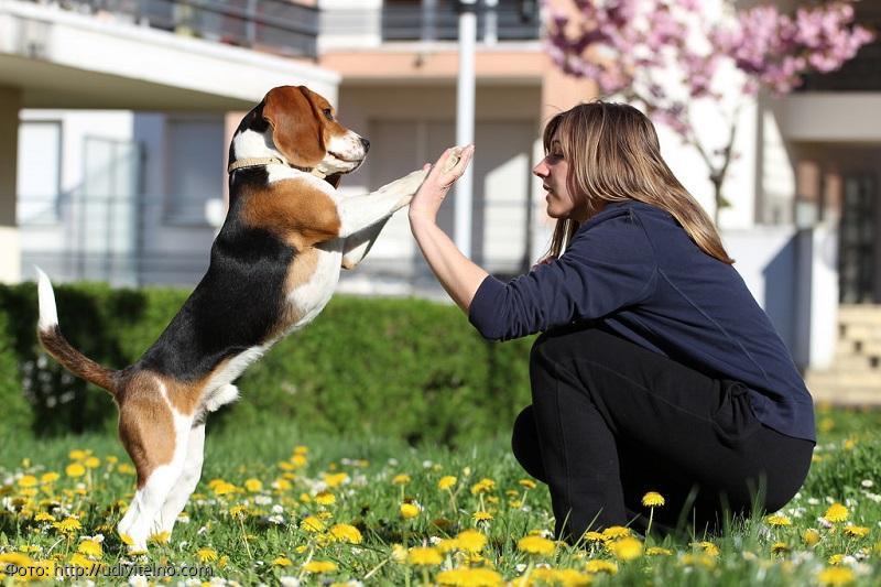 5 причин завести собаку