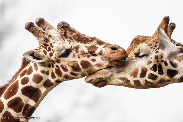 10 фото, показывающих заботу и любовь в дикой природе