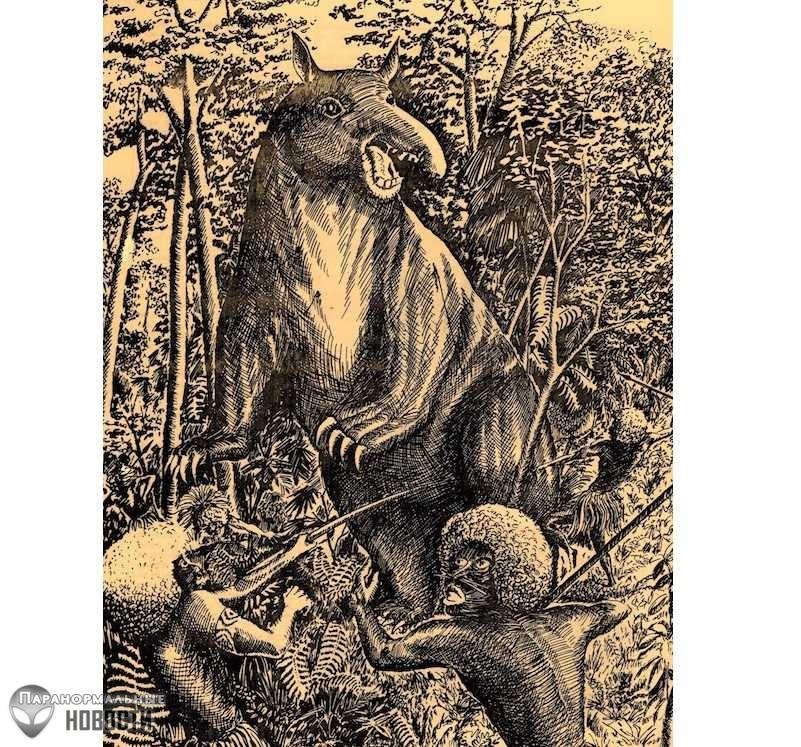 Загадочная «Свинья-Дьявол», живущая в джунглях Новой Гвинеи