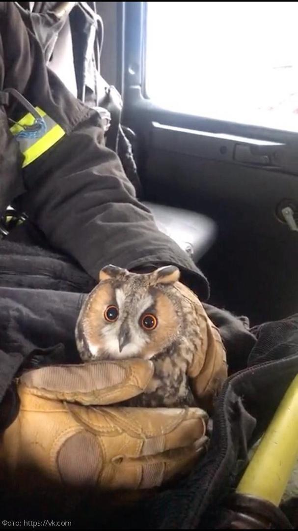 В Москве пожарные спасли сову
