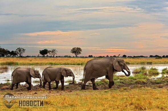 «Колыбель человечества» обнаружили в болотах Ботсваны