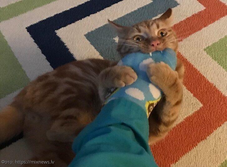 10 фотографий котов, наглость которых просто поражает