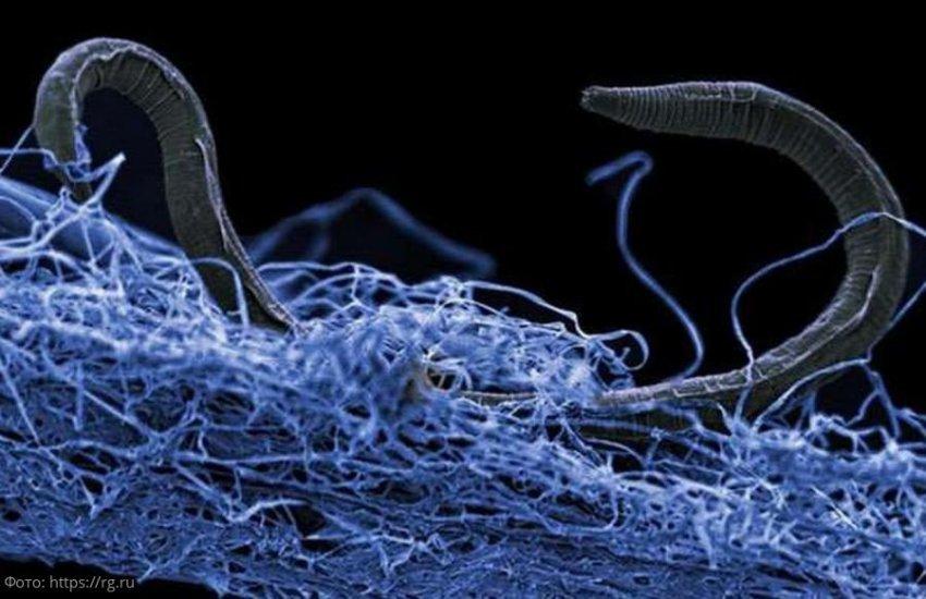 Опасность бактерий, живущих на смартфоне