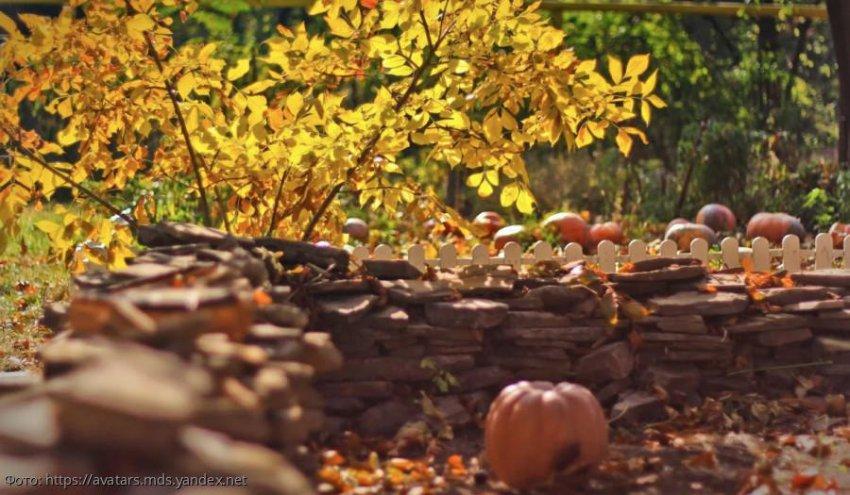 Лунный календарь садовода-огородника с 7 по 13 октября