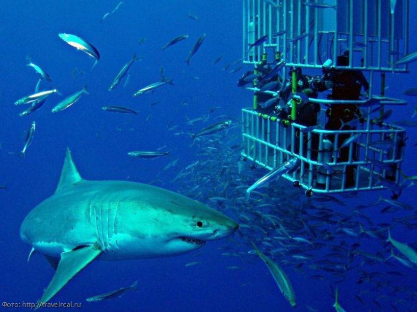 Ведущая Первого канала Екатерина Андреева покормила белых акул