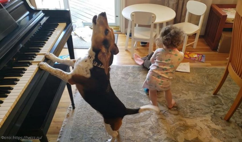 Отец заснял танцы своей маленькой дочки под игру их пса на пианино