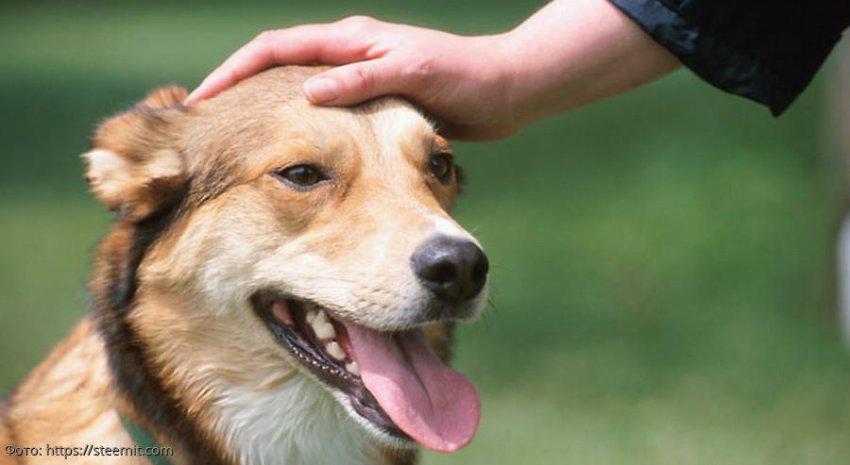 История из жизни: верный пёс разоблачил хозяина, принеся ему вместо тапок доказательство измены