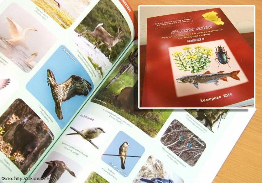 Утверждена комиссия по редким и находящимся на грани исчезновения животным, растениям и грибам, но перспектива неясна