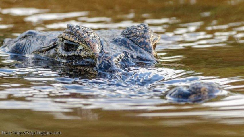 Маленькая девочка выколола глаза крокодилу, спасая подругу из его пасти