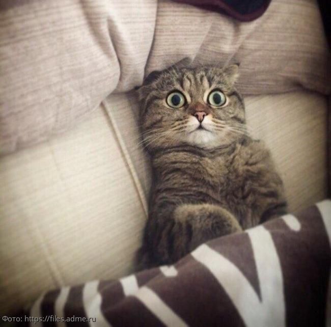 10 фотографий, которые демонстрируют всю суть котов