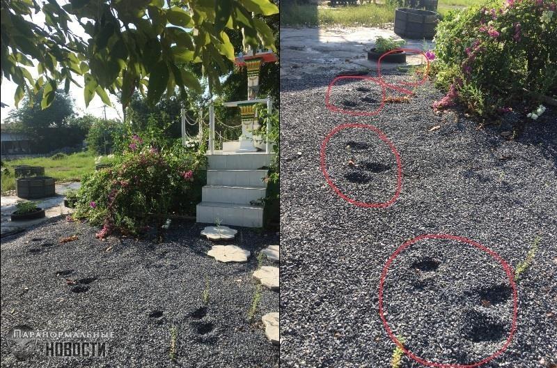 Мужчина обнаружил возле своего дома странные следы