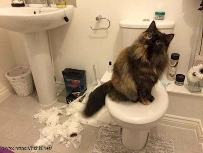 10 фото, доказывающих, что котики плевать хотели на правила