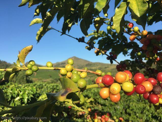 10 фактов о кофе, о которых вы могли не знать