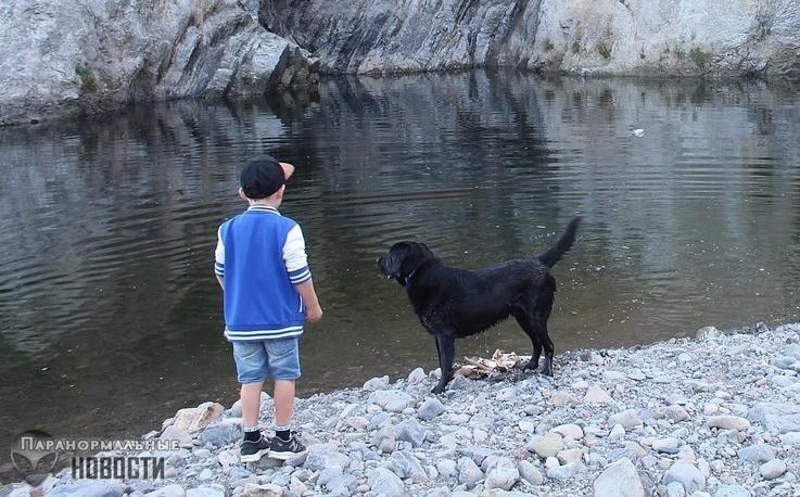 Странные воспоминания о собаке, которую на самом деле никто не видел